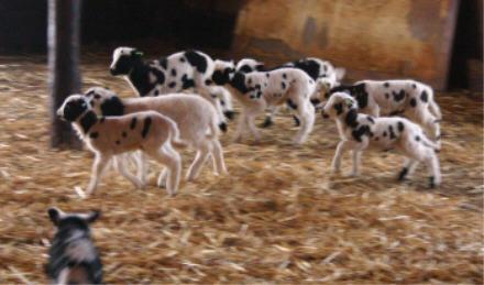 web-lambs.jpg