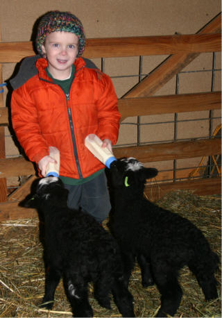 web-theron-feeding-black-lambs.jpg