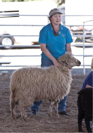 OFFF Churro ewe