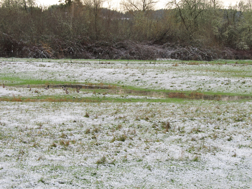 Image result for skiff of snow
