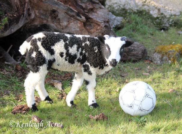 web-soccer-lambs-2