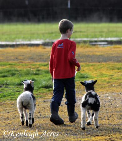 web-soccer-lambs-6