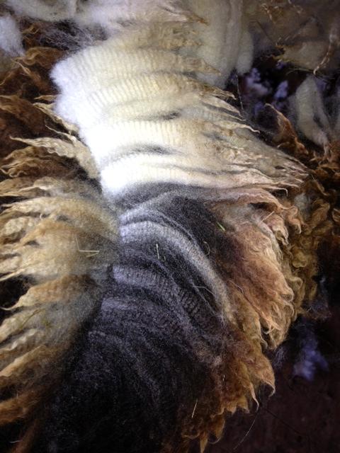 web shearing 15