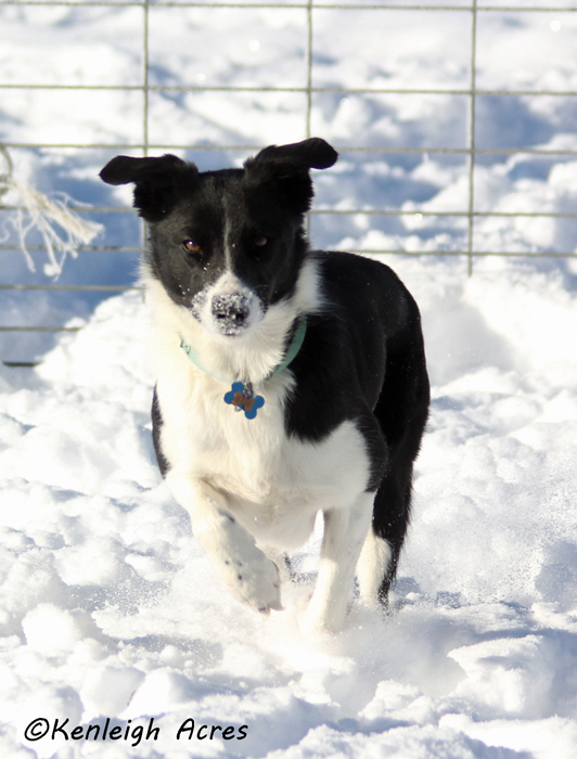 web-dogs-in-snow-11