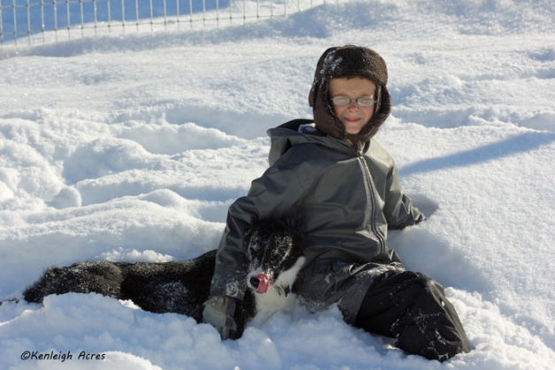web-dogs-in-snow-18