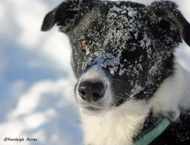 web-dogs-in-snow-19
