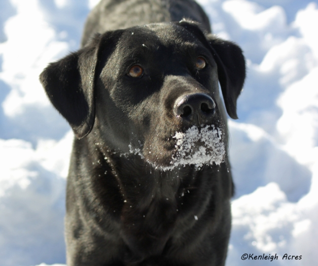 web-dogs-in-snow-2