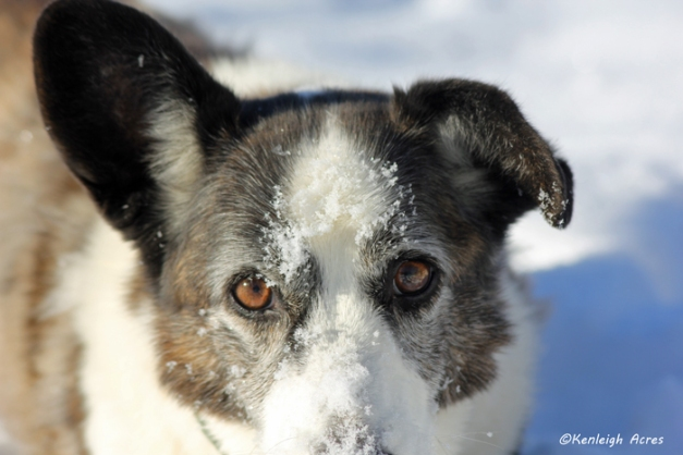 web-dogs-in-snow-6