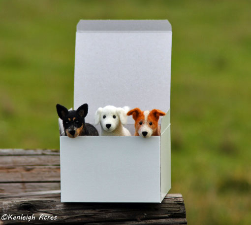 web-pups-in-box